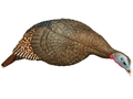 H.S. Strut Penny Snood Feeder Hen Turkey Decoy