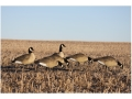 Product detail of GHG Hunter Series Full Body Canada Goose Decoys Looker Pack of 4