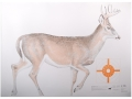 Product detail of NRA Official Lifesize Game Target White Tail Deer Paper Package of 12