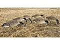 Avian-X Flocked Honker Feeders Full Body Goose Decoy Pack of 6