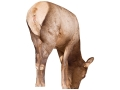 Montana Decoy Miss September Elk Decoy Cotton, Polyester and Steel