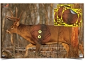 "Birchwood Casey Eze-Scorer Whitetail 23"" x 35"" Target with 4 Pack of Shoot-N-C Oval Overlay Target Package of 2"