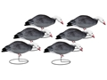 Hard Core Feeder Blue Goose Full Body Decoy Pack of 6