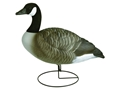 Flambeau Storm Front Full Body Standard Pack Canada Goose Decoys Pack of 6
