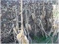 Camo Systems Ultra-Lite Camo Netting Blind Material Polyester