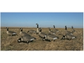 GHG Hunter Series Full Body Canada Goose Decoys Feeder Pack of 6
