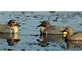 GHG Life-Size Green-Winged Teal Duck Decoy Pack of 6