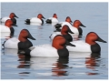 Product detail of GHG Oversize Weighted Keel Canvasback Duck Decoys Pack of 6