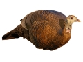 Montana Decoy Teaser Hen Turkey Decoy Cotton, Polyester and Steel