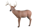 Rinehart Big Ten Buck Deer 3-D Foam Archery Target