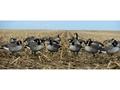 GHG FFD Elite Honker Full Body Goose Decoy Pack of 6