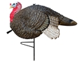 Primos Gobbstopper Jake Turkey Decoy