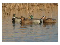 GHG Pro-Grade Pre-Texas Rigged Harvester Pack Mallard Duck Decoy Pack of 12