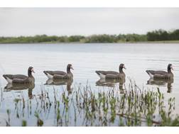 Tanglefree Pro Series Specklebelly Goose Floater Decoy Pack of 4