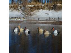 GHG Pro-Grade Canvasback Sleeper Duck Decoy Pack of 6