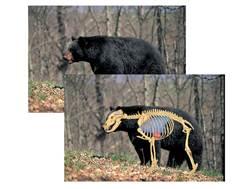 """Safari Press Perfect Shot North American Target Black Bear 24"""" x 36"""" Package of 5"""