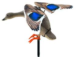 Lucky Duck Rapid Flyer Mallard Hen Motion Duck Decoy Combo