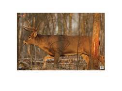 "Birchwood Casey Eze-Scorer Deer Targets 23"" x 35"" Package of 2"