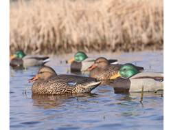 GHG Hot Buy Mallard Duck Decoy Pack of 12