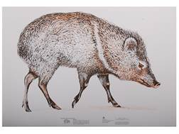 NRA Official Lifesize Game Targets Javelina Paper Package of 50