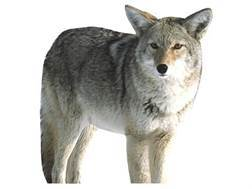 Montana Decoy Kojo Coyote Decoy Cotton, Polyester and Steel
