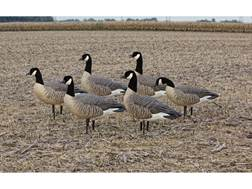 Avian-X Flocked Active Lesser Goose Decoy Pack of 6