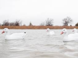 Tanglefree Pro Series Snow Goose Floater Decoy Pack of 4