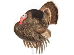 Dave Smith Decoys DSD Strutter Gobbler Turkey Decoy