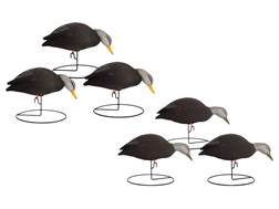 Hard Core Feeder Black Duck Full Body Decoy Pack of 6