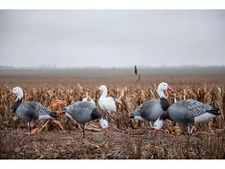 Tanglefree Pro Series Blue Goose Full Body Combo Decoy Pack of 6