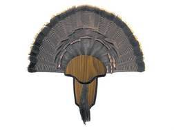 H.S. Strut Tail and Beard Turkey Mounting Kit