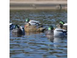 GHG Pro-Grade Mallard Rester January Duck Decoy Pack of 6