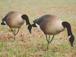 Tanglefree Pro Series Greater Goose Decoy Full Body Feeder Decoy Pack of 6
