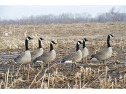 Avian-X Painted Honkers Sentry Canada Goose Decoy Pack of 6
