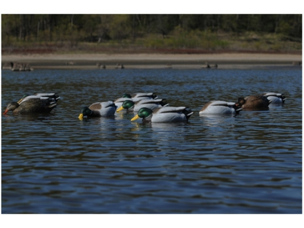GHG Pro-Grade Weighted Keel January Mallard Duck Decoys Surface Feeder Pack of 6