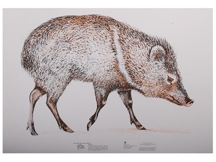 NRA Official Lifesize Game Target Javelina Paper Package of 50