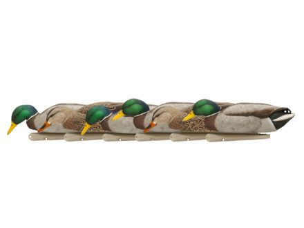 Avian-X Back Water Mallards Weighted Keel Duck Decoy Pack of 6 (4 Drakes, 2 Hens)