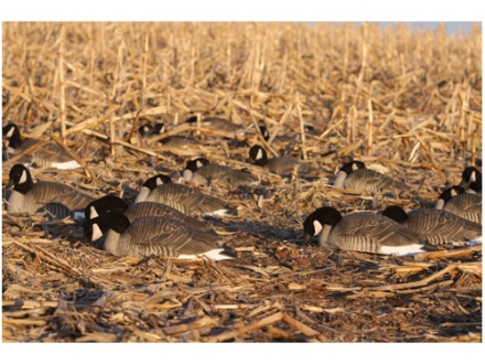 GHG Pro-Grade Honker Goose Shells Harvester Pack of 12