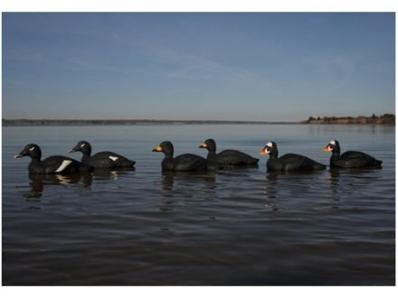 GHG Commercial Grade Weighted Keel Foam Filled Scoter Duck Decoys Harvester Pack of 6