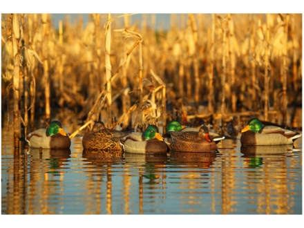 GHG Pro-Grade Weighted Keel Mallard Duck Decoys Harvester Pack of 12
