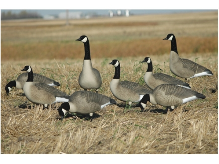 GHG Hunter Series Full Body Canada Goose Decoys Active Pack of 6