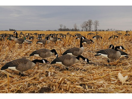 GHG Pro-Grade Full Body Honkers Goose Decoys Harvester Pack of 6
