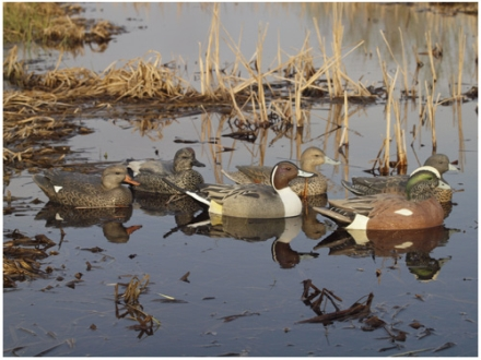GHG Life-Size Weighted Keel Duck Decoys Puddler Pack of 6