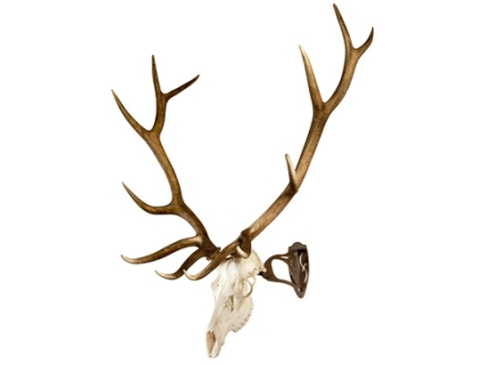 Skull Hooker Big Hooker European Mount Display Steel