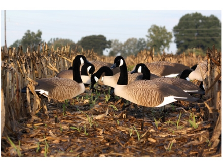 Higdon Super Magnum Full Form Active Canada Goose Shell Decoy Pack of 6