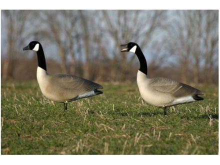 Flambeau Storm Front Full Body Upright Pack Canada Goose Decoys Pack of 4