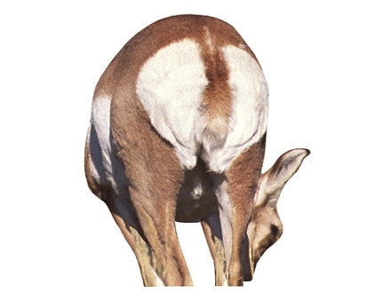 Montana Decoy Doe Antelope Decoy Cotton, Polyester and Steel