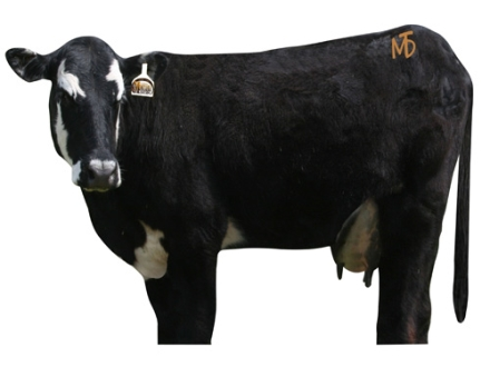 Montana Decoy Moo Cow Decoy Cotton, Polyester and Steel