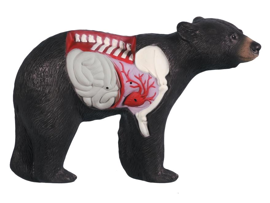 Black bear anatomy
