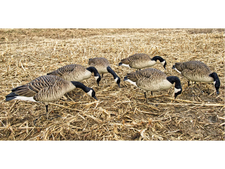 Avian-X Honker Feeders Full Body Goose Decoy Pack of 6